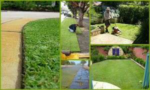 Chesterfield Lawn Maintenance | Picture Perfect Lawn Maintenance | (804) 530-2540