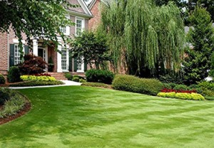 Chesterfield VA Lawn Care Weed Control | Picture Perfect Lawn Maintenance | (804) 530-2540
